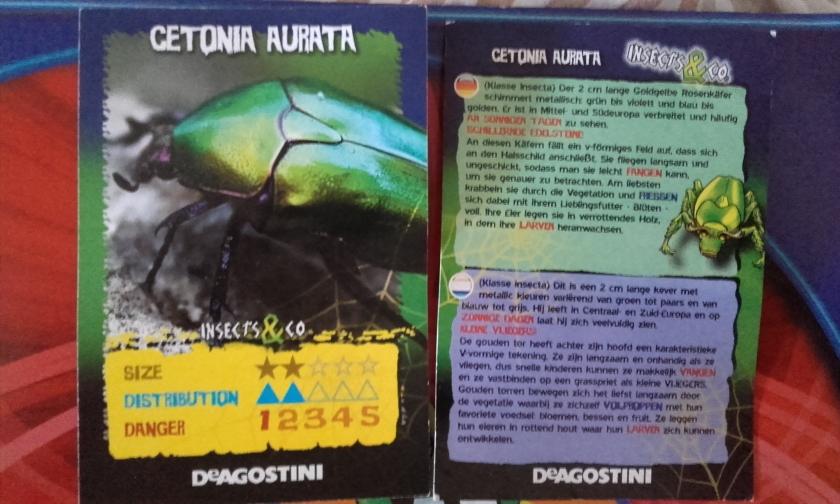 Insects & Co. - Cétoine dorée